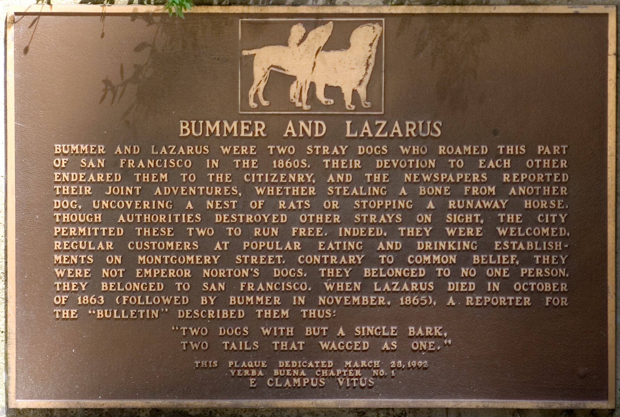 famous stray dogs bummer and lazarus