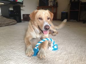 Chase was an energetic and playful dog but his life was cut tragically short by a commonly misdiagnosed fungal disease.