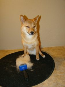 12 Dog Hair Removal Tools That Ll Change Your Life