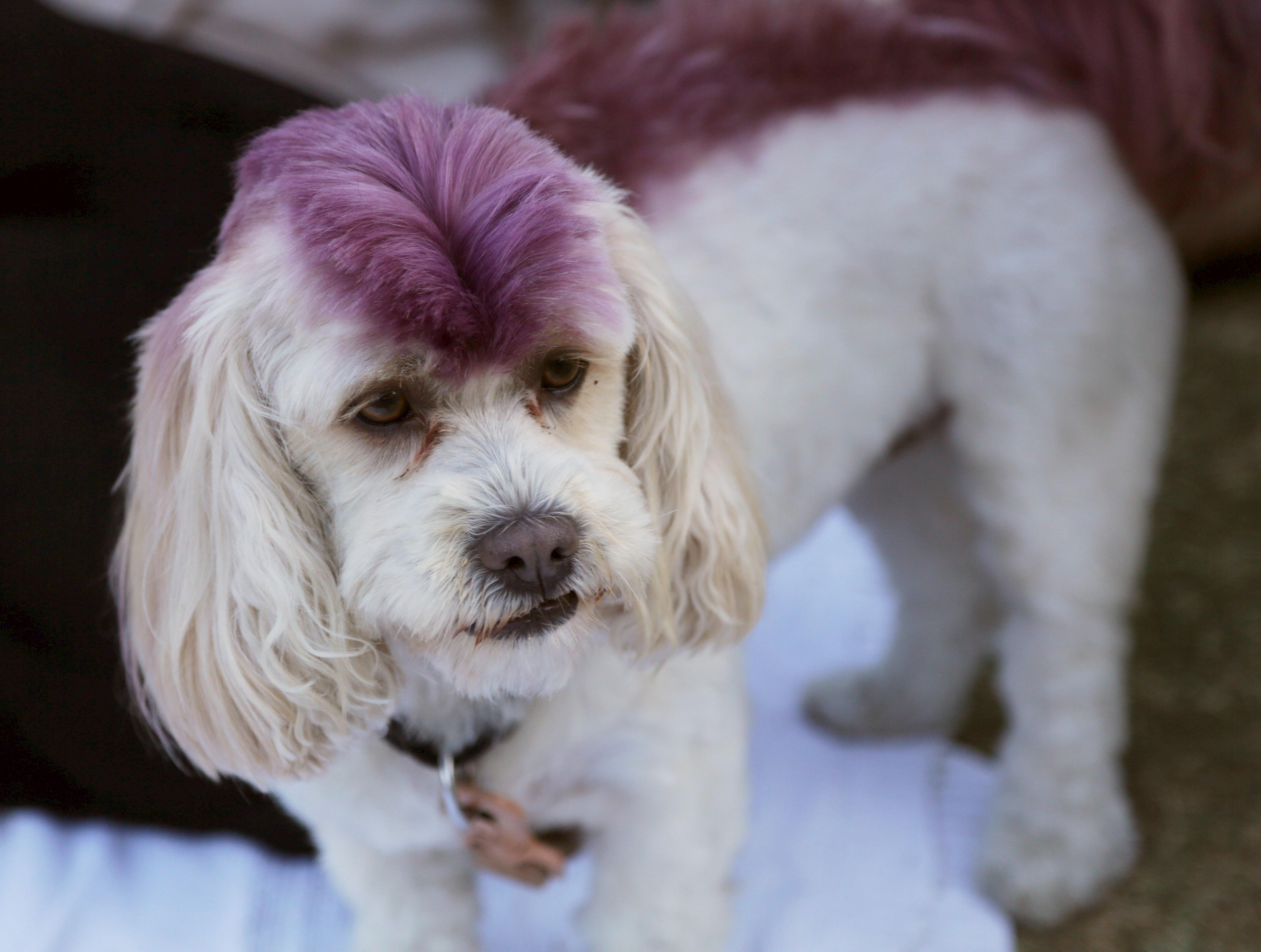 Dog Hairstyles