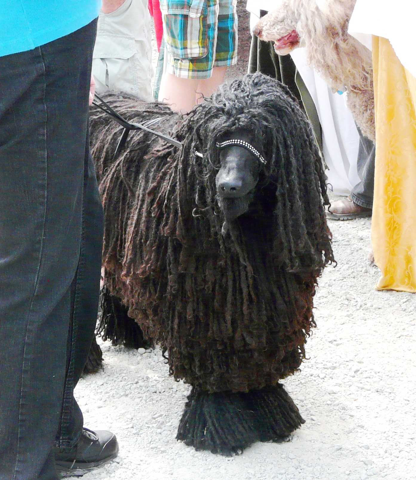 Wowza 5 Hilarious Dog Hairstyles Rover Com