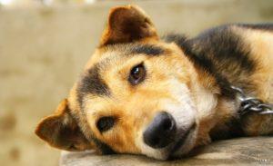 Sad dog - dog diseases
