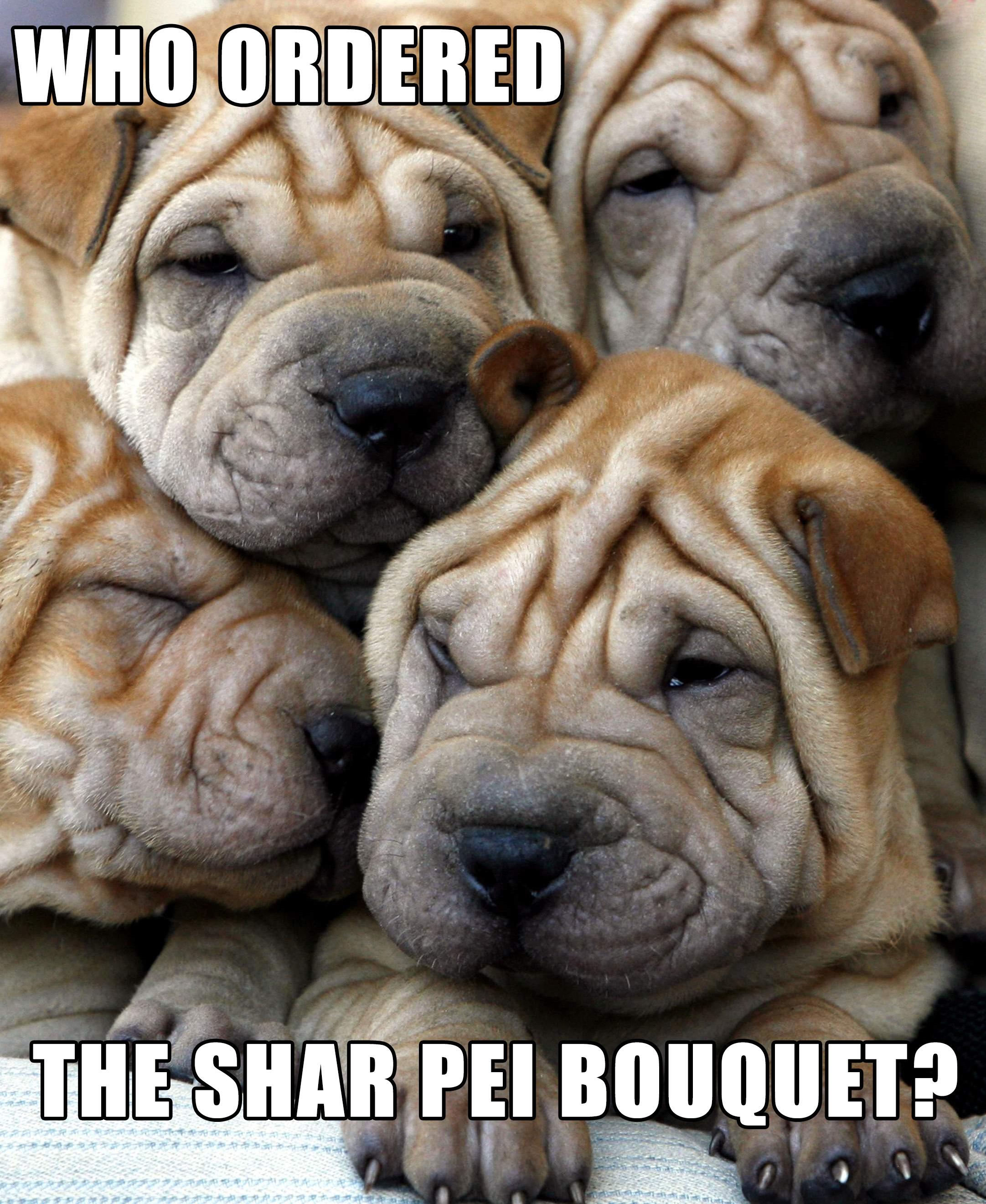 shar pei bouquet MEME