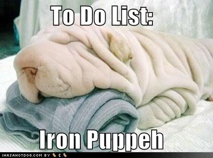 shar pei dog wrinkle meme