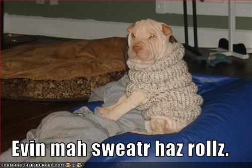 shar pei sweater