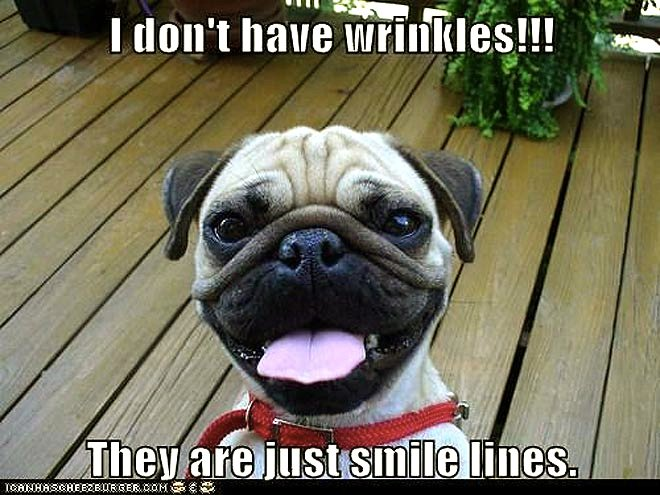 smile lines pug puppy