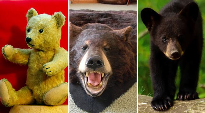 teddy bear bearskin rug actual bear fmk