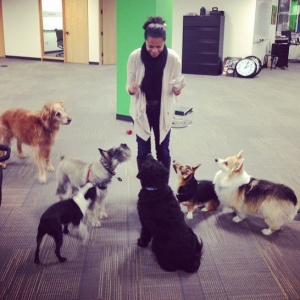 Treat time at Rover.com