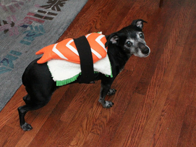 11 diy dog hacks thatll change your life rover a delicious do it yourself dog costume solutioingenieria Image collections