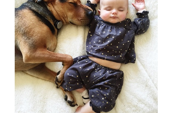 The Dog Called The Baby Sitter | Dog Breeds Picture