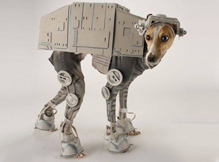 at at walker italian greyhound star wars day
