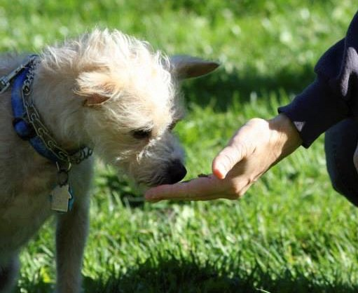 When meeting a dog for the first time, reach your hand out gently and let the dog come to you. Photo courtesy of The Pooch Coach, Beverly Ulbrich.