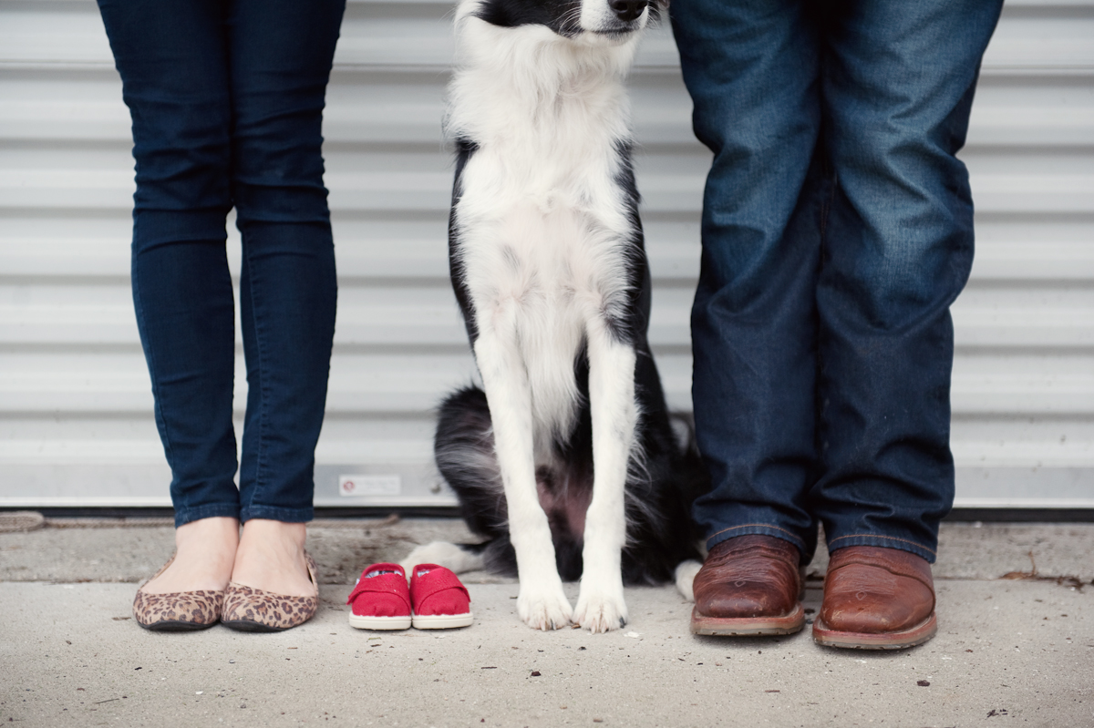 border collie dog baby announcement