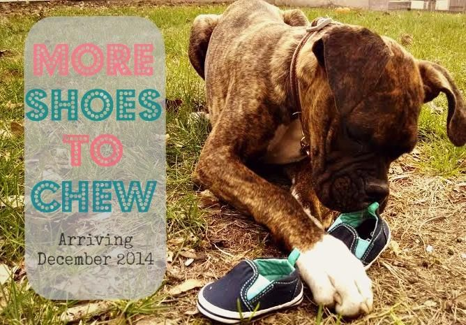 brindle boxer baby announcement