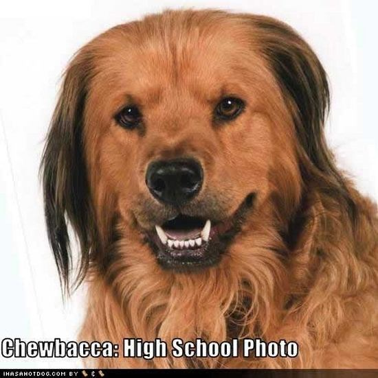 chewbacca dog high school photo star wars day