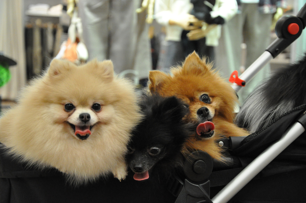 Dog Cuteness The Science Behind The Adorableness Of Our Pets