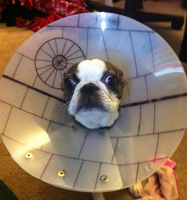 death-star-boston-terrier-star-wars-day