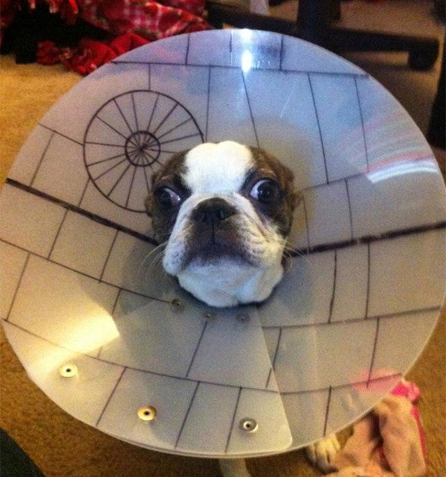 death-star-boston-terrier-star-wars-day