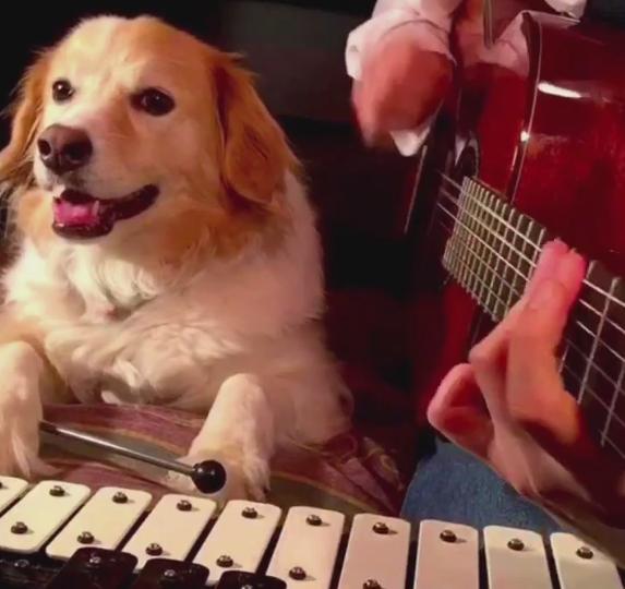 Dog drummer - dog Vines
