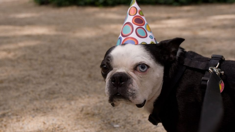 Dog in a party hat - pet parenthood