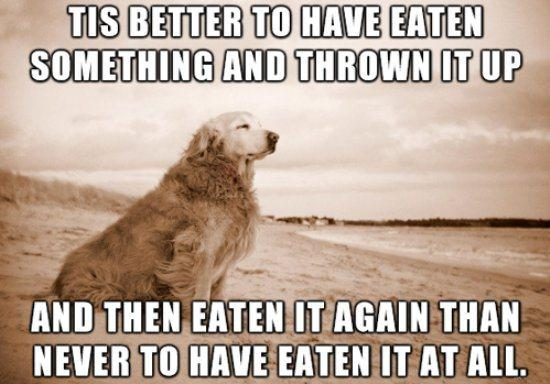 eating barfing dog philosophy