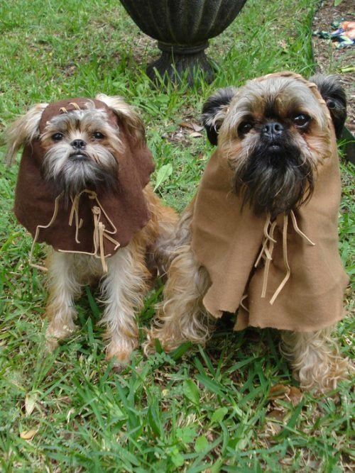 ewok dogs star wars day