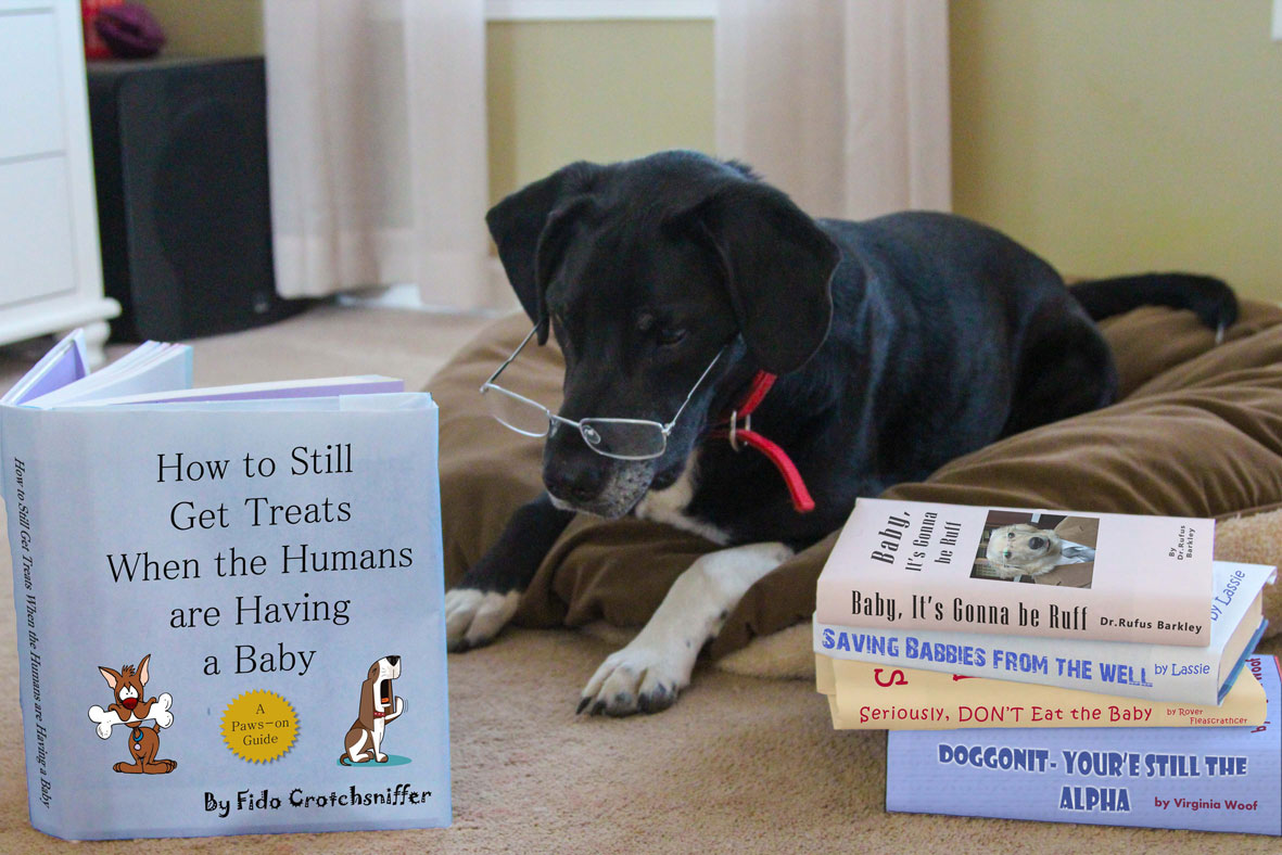 10 Baby Announcements With Dogs That Will Make You Squee The Dog People By Rover Com