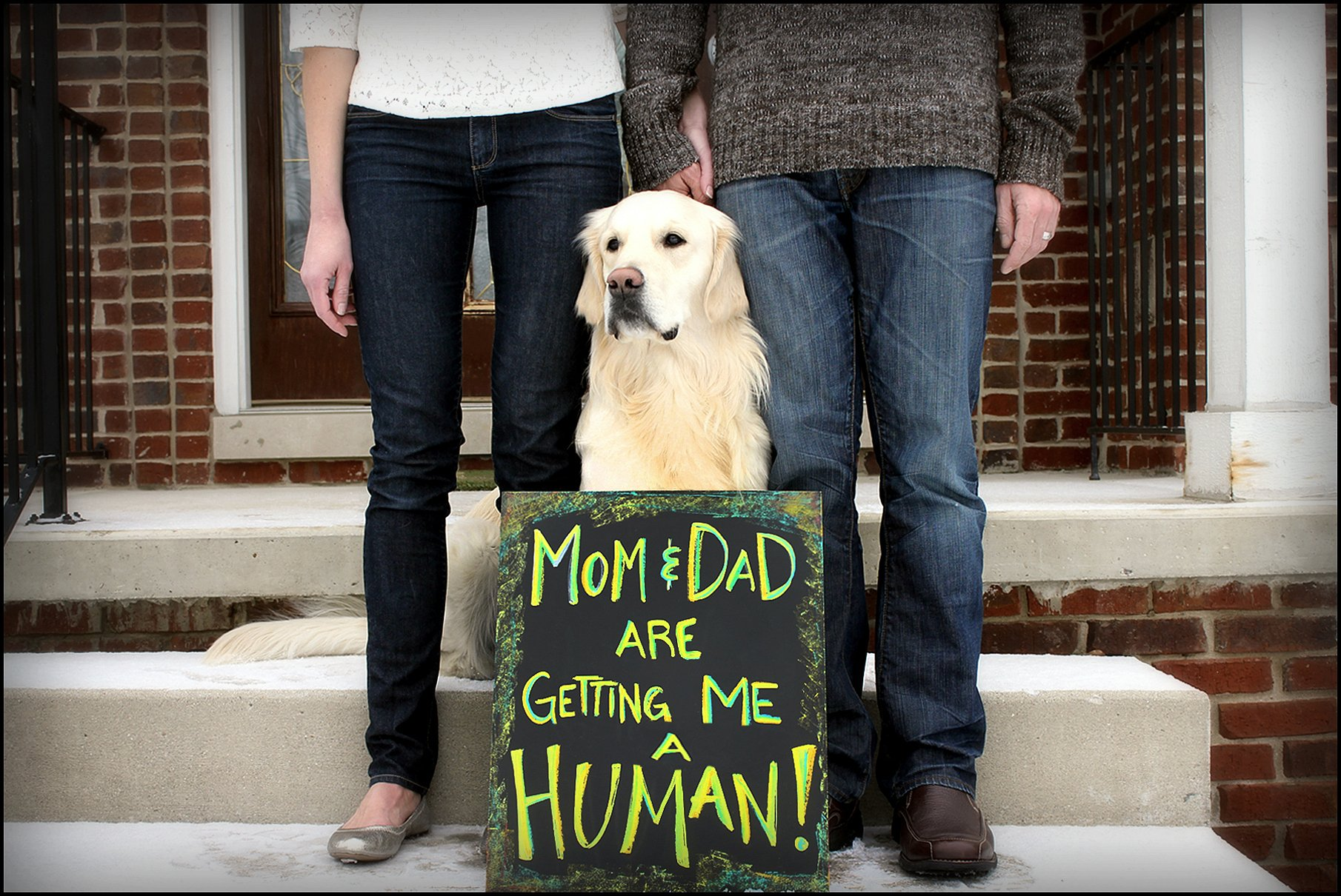golden retriever baby announcement