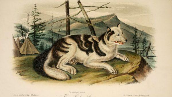 7 Extinct Dog Breeds You've Gotta See to Believe