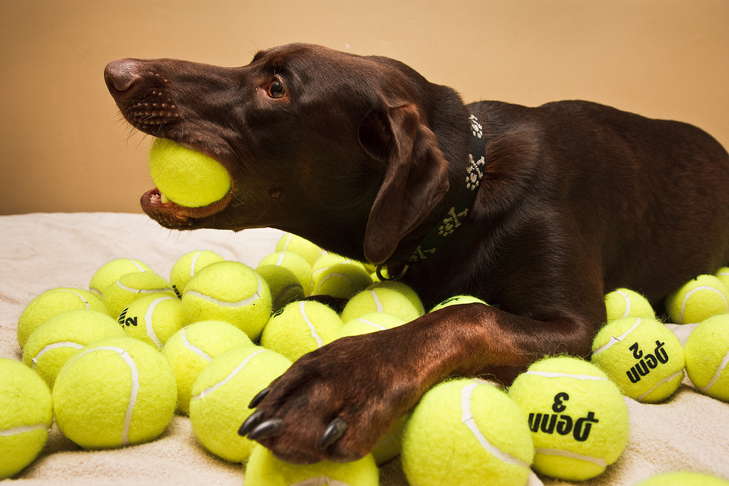 9 Dangerously Obsessive Dog Behaviors The Dog People By