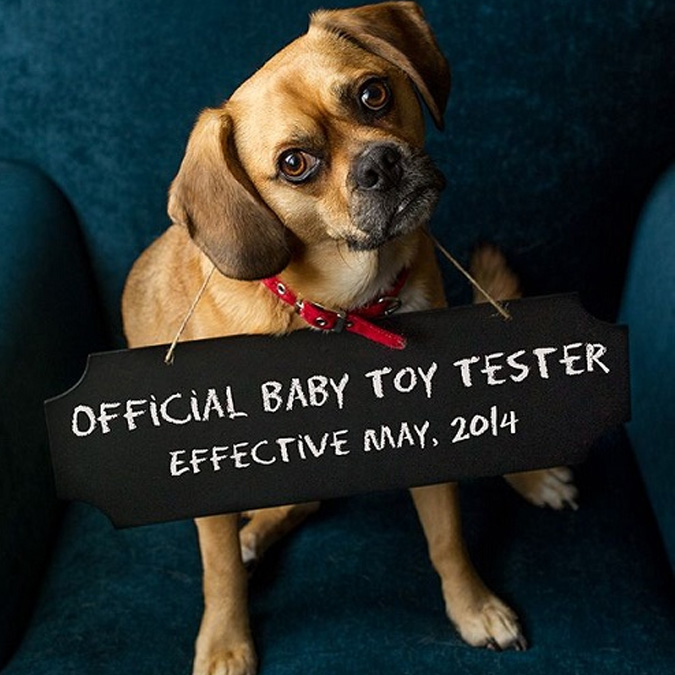 puggle dog baby announcement