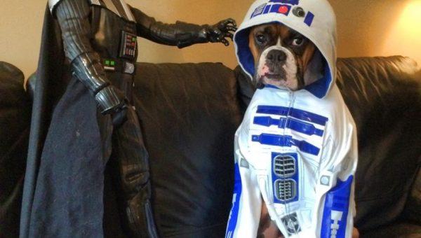 r2dog2 boxer star wars day