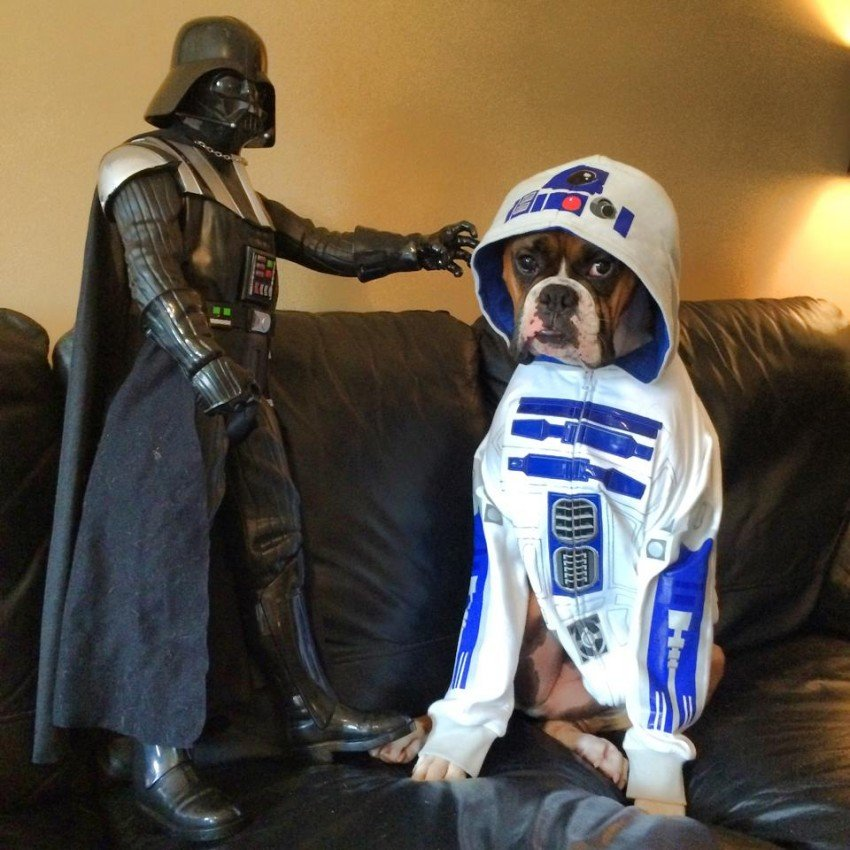 r2dog2 boxer star wars day