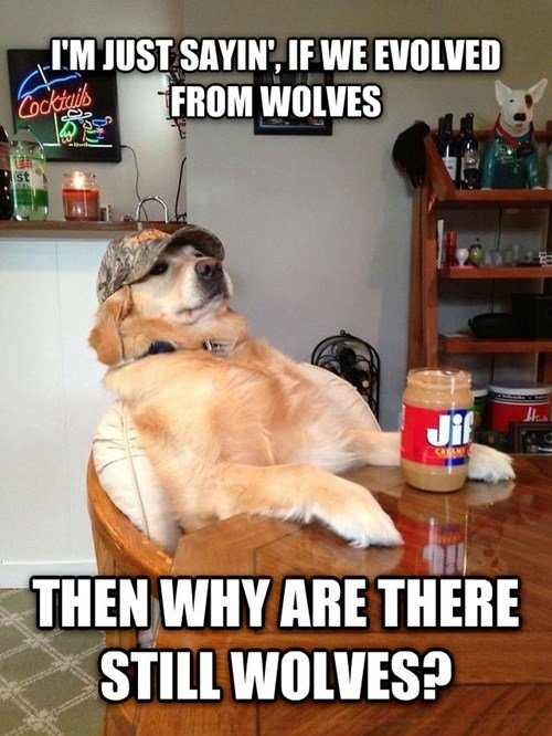 redneck retriever dog philosopher wolves
