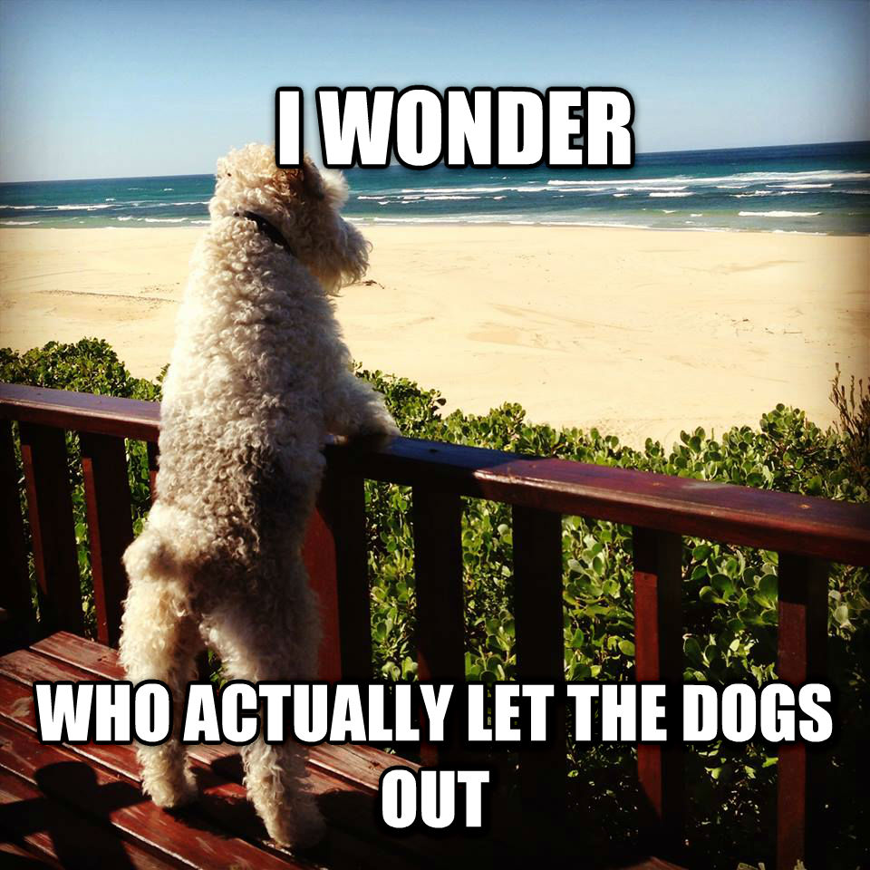 who let the dogs out philosophical pup