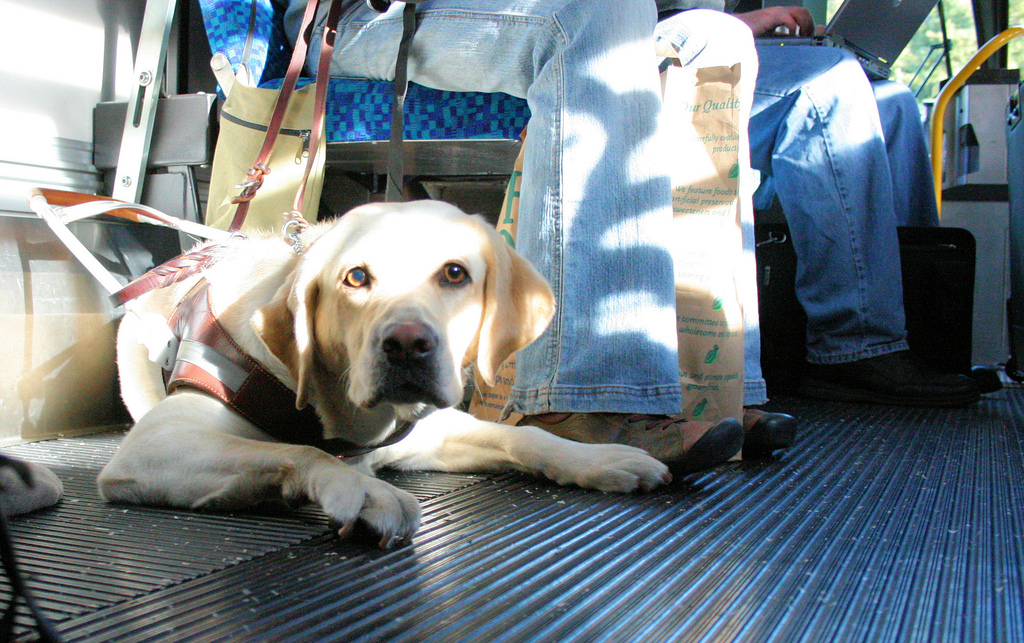 Can Dogs Ride Public Transportation