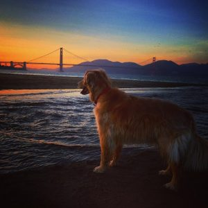 Henry_Golden_Gate_Bridge