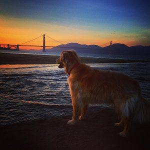 Henry_Golden_Gate_Bridge