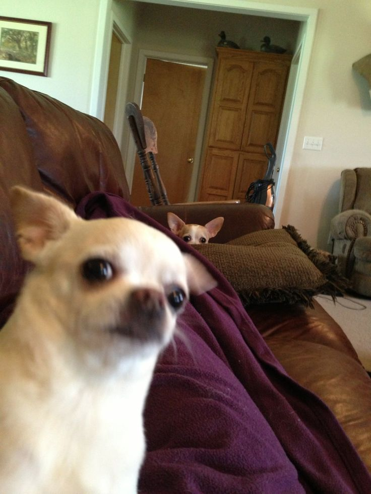 11 Incredible Dog Selfies That'll Make Your Day | The Dog