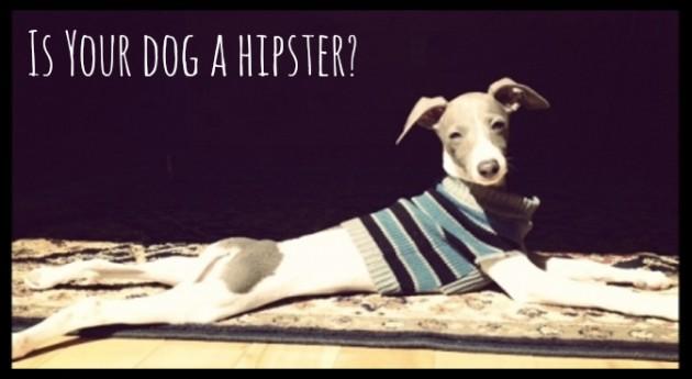 dog fashion hipster sweater