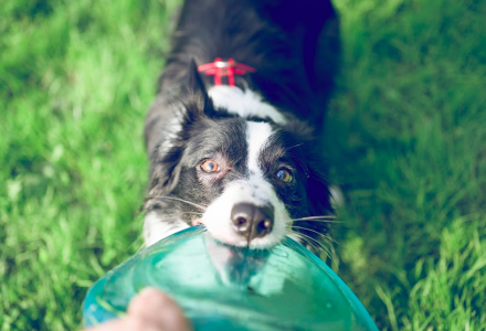 Dog with frisbee - dog aggression