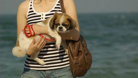 Best dog leash - woman holds dog