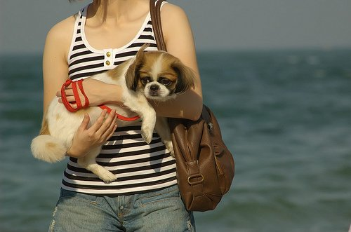 Best dog leash - woman holds dog
