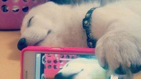 Dog takes a selfie