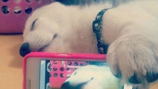 11 Incredible Dog Selfies That'll Make Your Day