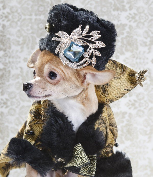 dog vogue chihuahua fashion sophie gamand