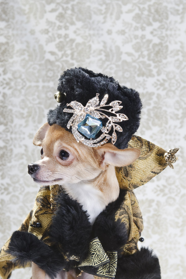 dog vogue chihuahua fashion sophie gamand