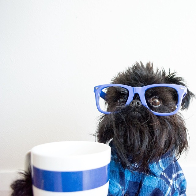 aloysius fashion instagram dog hipster
