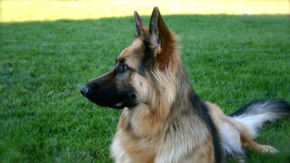 Top 25 German Dog Names For Male And Female Dogs