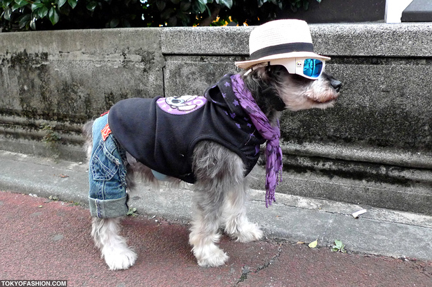 hipster dog street fashion japan